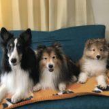 中型犬の種類、人気ランキング!室内で飼いやすいのは抜け毛が少ない?