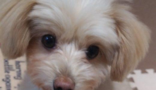 犬を飼うのは不安?準備と覚悟。登録に必要なものと混合ワクチンの時期も。