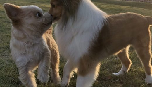 小型犬で人気の種類ランキング。テリアやミックスなどを画像と一覧で。