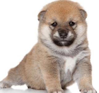 犬の種類、日本での人気ランキング!細いあの犬種や猟犬、胴長など!