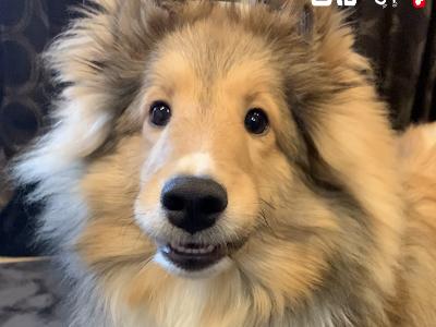 新型コロナウイルスは犬などのペットにもうつる?対処法は?