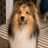 犬のブラッシング(グルーミング)スプレーを手作り!無添加は安全?おすすめの方法は。