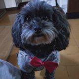 ハロウィン2021!小型犬におすすめな衣装(服)やグッズを紹介。