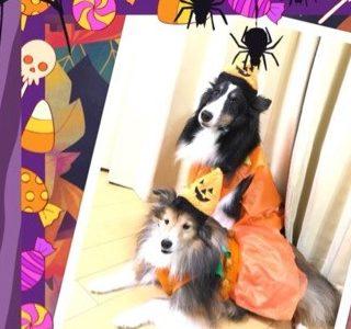 ハロウィン2021!中型犬におすすめな衣装(服)とグッズは?