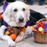 ハロウィン2021!大型犬におすすめな服(衣装)やグッズ。