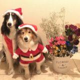 クリスマス2021!中型犬におすすめのグッズや衣装(服)。プレゼントも!