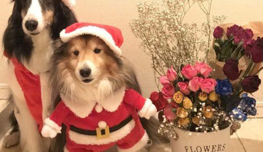 クリスマス2020!中型犬におすすめのグッズや衣装(服)。プレゼントも!