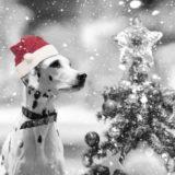 クリスマス2020。大型犬の衣装(服)や、プレゼントのおすすめ!グッズも。